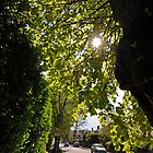 Tree Lined Streets Of Cheltenham, Gloucestershire, UK by Nick  Gill