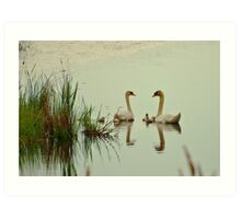 Swan Pair with Cygnets Art Print