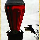 Hummingbird don't fly away, fly away... by Greeting Cards by Tracy DeVore