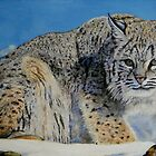 lynx by Troitsky