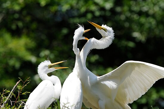 Crazy Egret Chicks  by Joe Jennelle