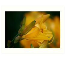 A Lily Amid the Lillies  Art Print
