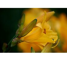 A Lily Amid the Lillies  Photographic Print