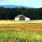 A Summer Meadow, Gettysburg by AngieDavies