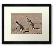 Kangaroos of Cania George Framed Print