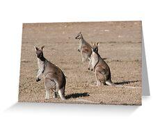 Kangaroos of Cania George Greeting Card
