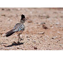 Greater Roadrunner (Tucson, AZ) Photographic Print