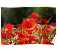 Nature Scape Poppies Poster