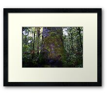 Moss only Grows on old trees Framed Print