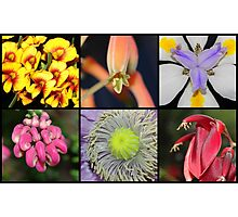 Collage of flowers Photographic Print