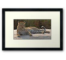 Leopard on the rocks 2 Framed Print