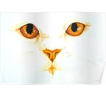 Topaz White Cat's Eyes Watercolour Painting Poster