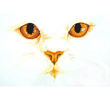 Topaz White Cat's Eyes Watercolour Painting Photographic Print