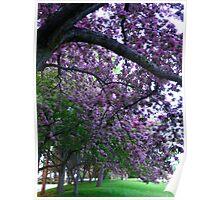 An abundance of blossoms Poster