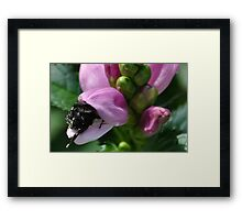 I Just Cant Get in Far Enough Framed Print