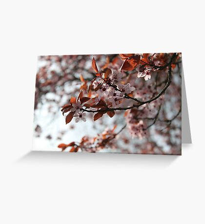 French Blossoms Greeting Card