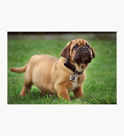 Pure Puppy Innocence Photographic Print