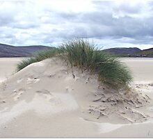 Sand Dune with Mohican Haircut - Western Isles by BlueMoonRose