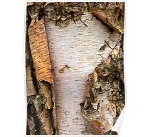 Birch Bark Detail Poster