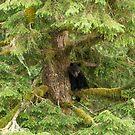 Grizzly Bear Cub by SusanAdey