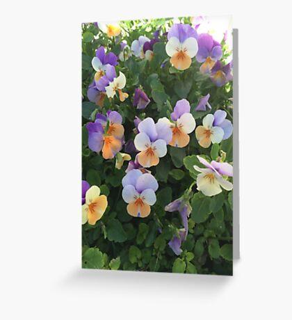 Pretty Pansies Greeting Card