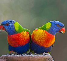 MIRROR IMAGE   RAINBOW LORIKEETS  QUEENSLAND AUSTRALIA by DIZZYHEIGHTS