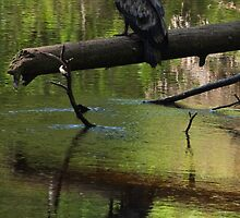 Blured Reflections on One's Youth by Coniferous