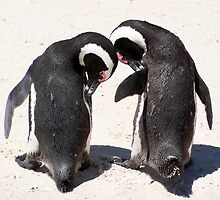 Penguins at Boulders Beach South Africa by Lynn Bolt