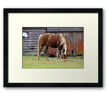 Horse and Farm Shed Framed Print