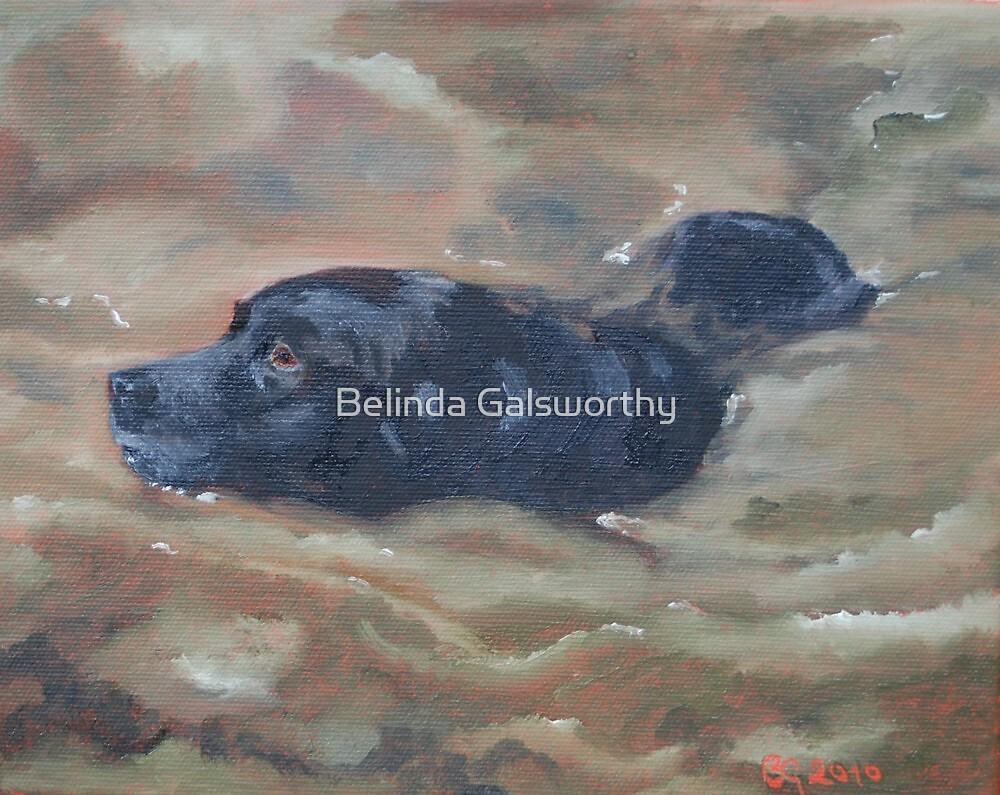 Tabitha, in a muddy pond. by Belinda Galsworthy