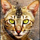 CAT PORTRAIT  by manumint