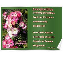 Sewejaartjies Poster