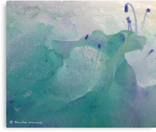 Beauty in the ice by © Pauline Wherrell