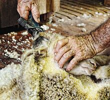 SHEARERS HANDS by Helen Akerstrom Photography