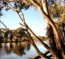 Wimmera River by Vicki73