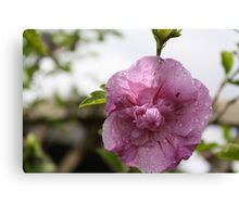 ANT IN FLOWER  Canvas Print