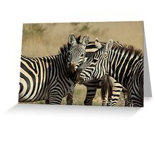 Out of Africa - Stripey Affection Greeting Card