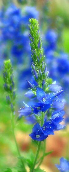 Brilliant Blue Flowers #1 by William Martin