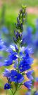 Brilliantly Blue Flowers #3 by William Martin
