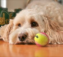Why won't anyone play ball with me? by Kathy Silcock