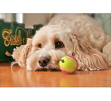 Why won't anyone play ball with me? Photographic Print