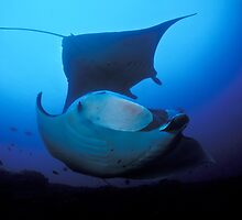 Two mantas by Fiona Ayerst