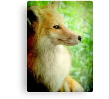 This is my best side!!!...White Tailed Fox © Canvas Print