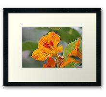 A Flor 8432 Framed Print