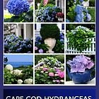 CAPE COD HYDRANGEAS by Joan Harrison