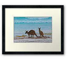 Beach Roos - Lucky Bay - Cape Le Grande - WA Framed Print