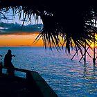 Look Honey - Heron Island - Australia by Anthony Wilson