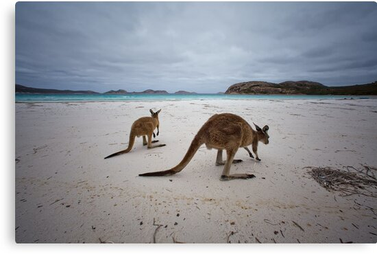 Lucky Bay - Cape LeGrande - West Australia by Chris Paddick