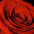 I am Rose by Jason Dymock Photography