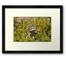 Perched Reptile Framed Print